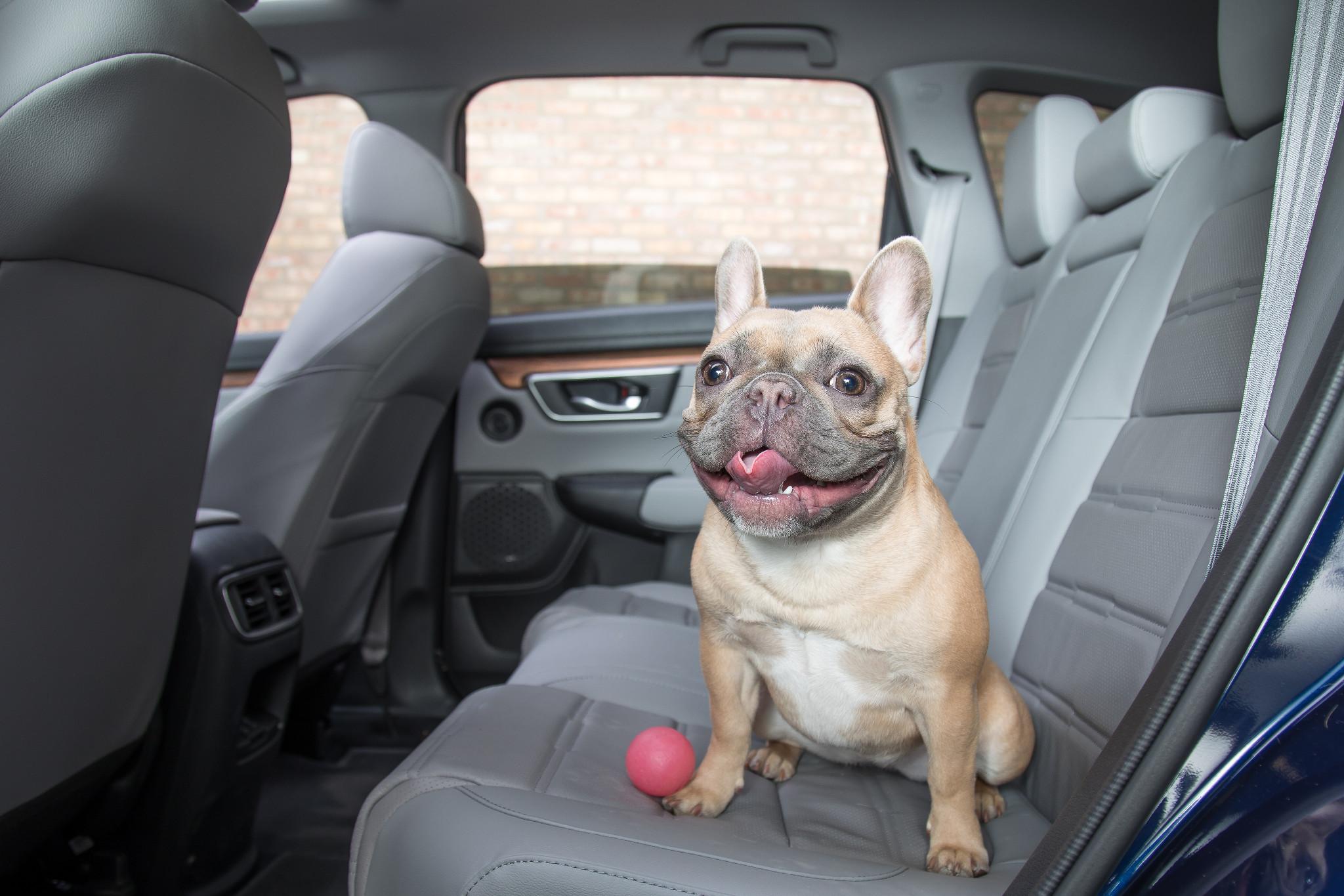 01-cars-social-puppy-cl.jpg