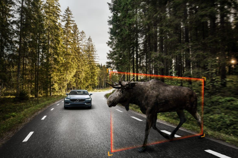 Volvo_Large_Animal_Detection.jpg